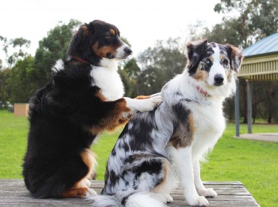 cos'è la pet therapy